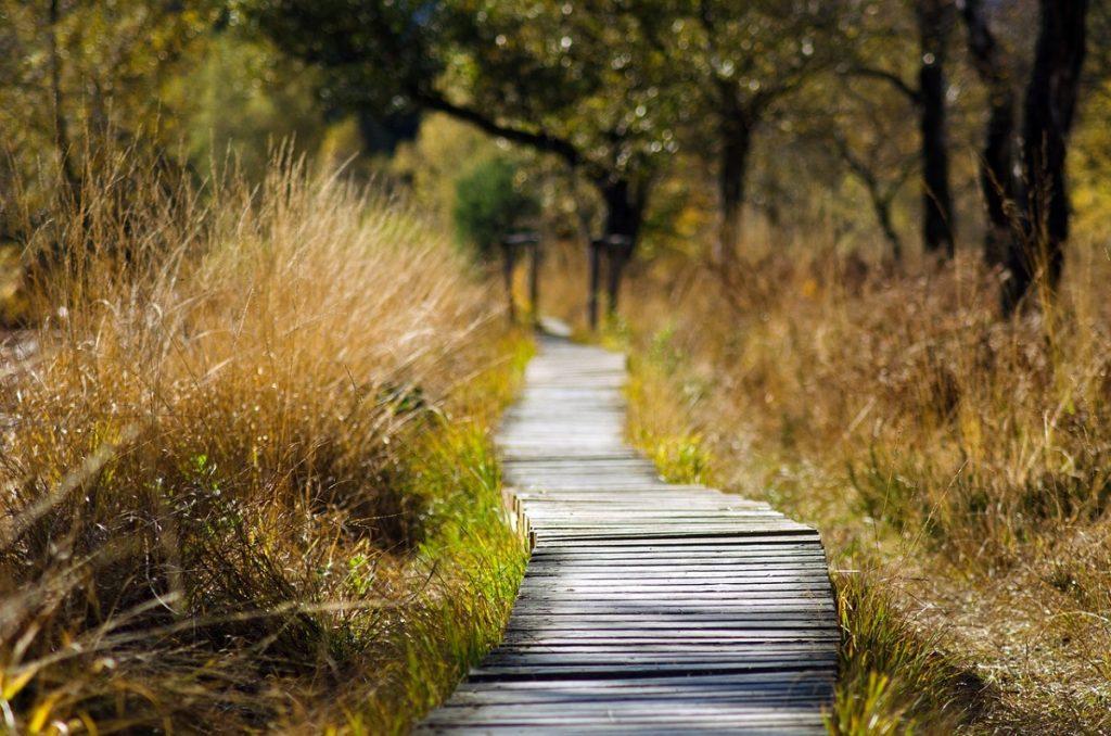 Psychoterapia zaburzeń lękowych. Dlaczego warto poddać się terapii?